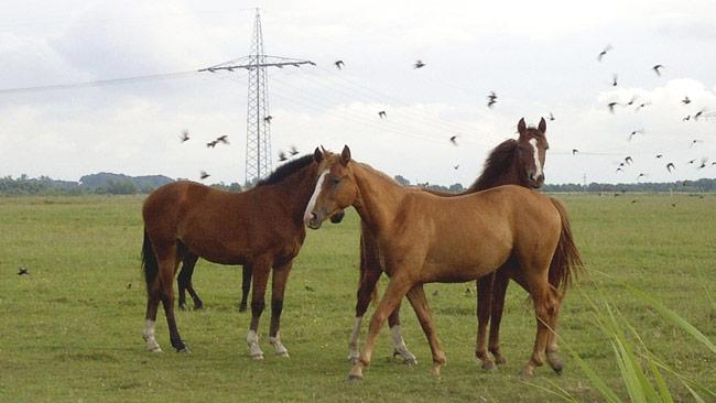 Nu är det enklare regler för att gräva ner en häst. Foto: Wikimedia