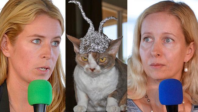 Katten på bilden har inget med bråket att göra. Bilden är ett montage. Foto: CC Frankie Fouganthin / Wikimedia Commons