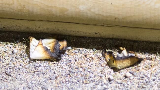 Bränt toapapper låg på marken intill en av byggnaderna. Foto: Nyheter Idag