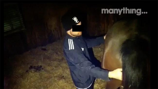 """Vidriga övergreppet på dräktiga stoet fångades på kamera: """"Vi har ett bra signalement på honom"""""""