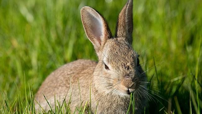 Kaniner torterades till döds i Malmö