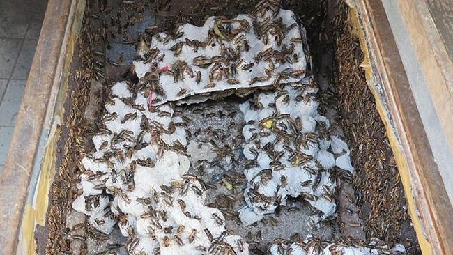 Nytt projekt ska lära barn att äta insekter och avfall