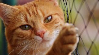 Killgäng torterade katt – stängs av från skola